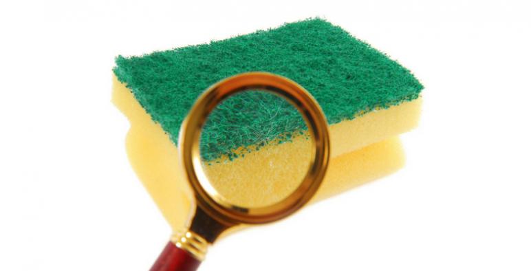 Sponge Germs